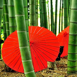 calcetines de bambu